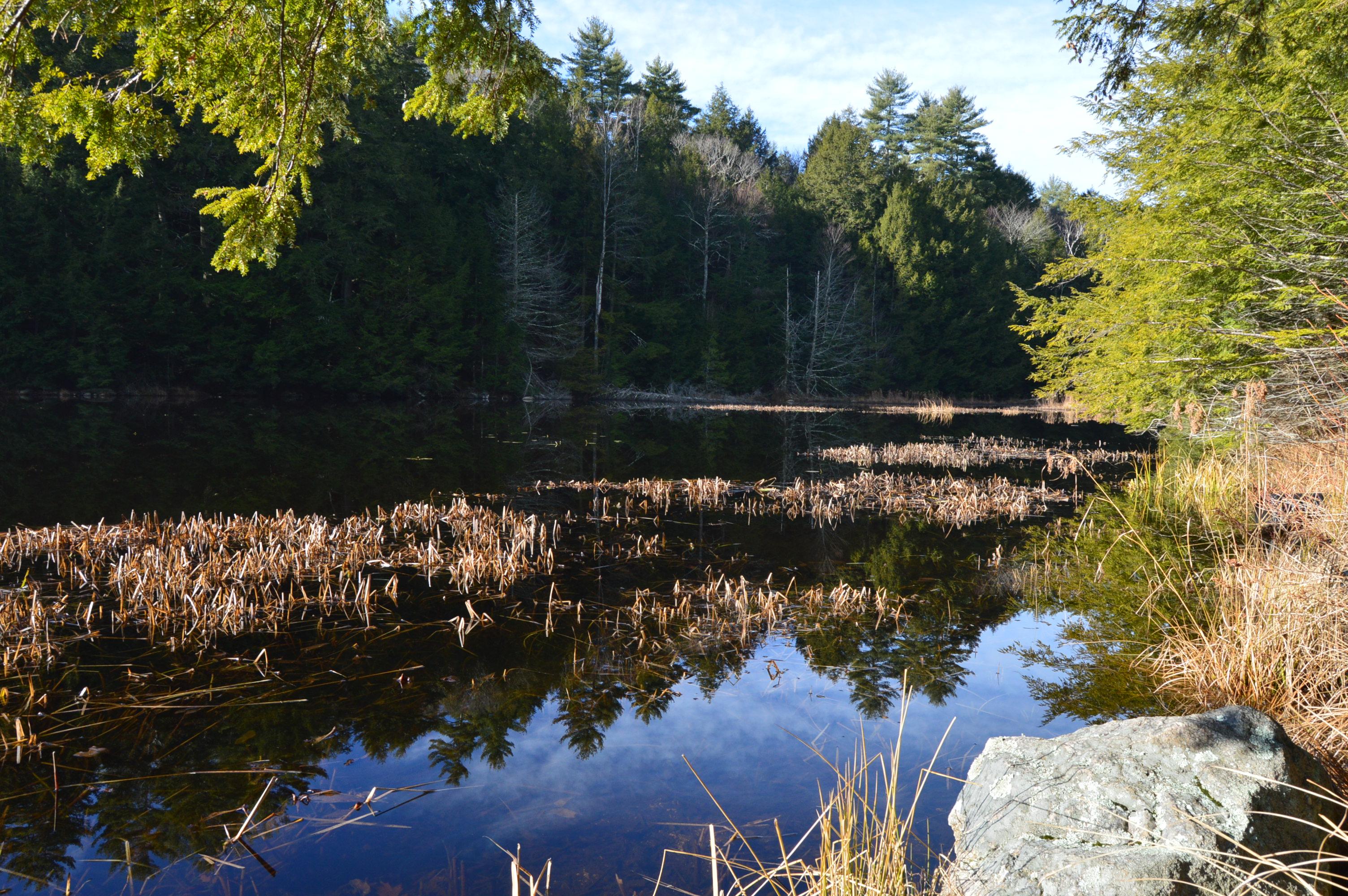 Pawtuckaway State Park Nottingham Nh New England Nomad
