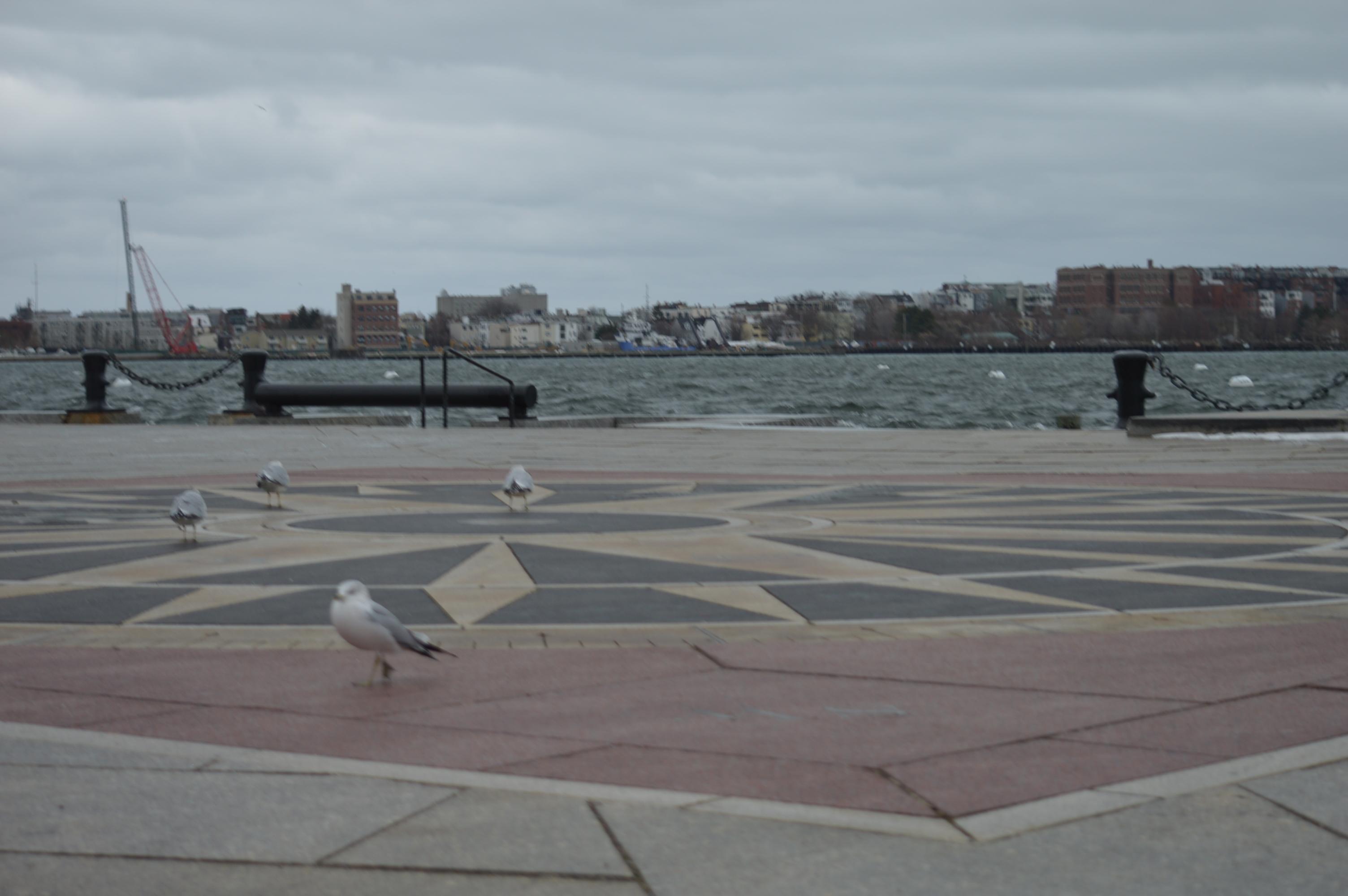 Winter Wildlife Cruise Boston Harbor Ma New England Nomad
